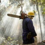 hombre, destruccion, naturaleza, cuidado, medioambiente, planeta, deforestacion