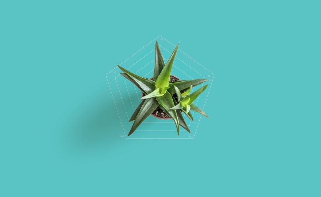 BBVA-Bonos-verdes-sostenibilidad-plantas-vegetación-naturaleza