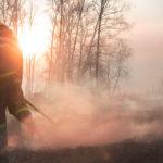BBVA-protocolo-catastrofe-bosque