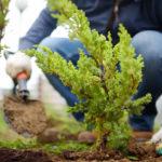 BBVA-Asset-magagement-solidarios-sostenibilidad