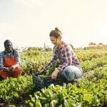 produccion_ecologica-campo-sostenibilidad