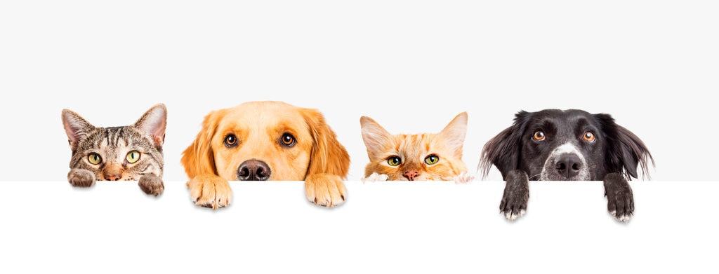 Seguros BBVA México lanza seguros para mascotas perros y gatos