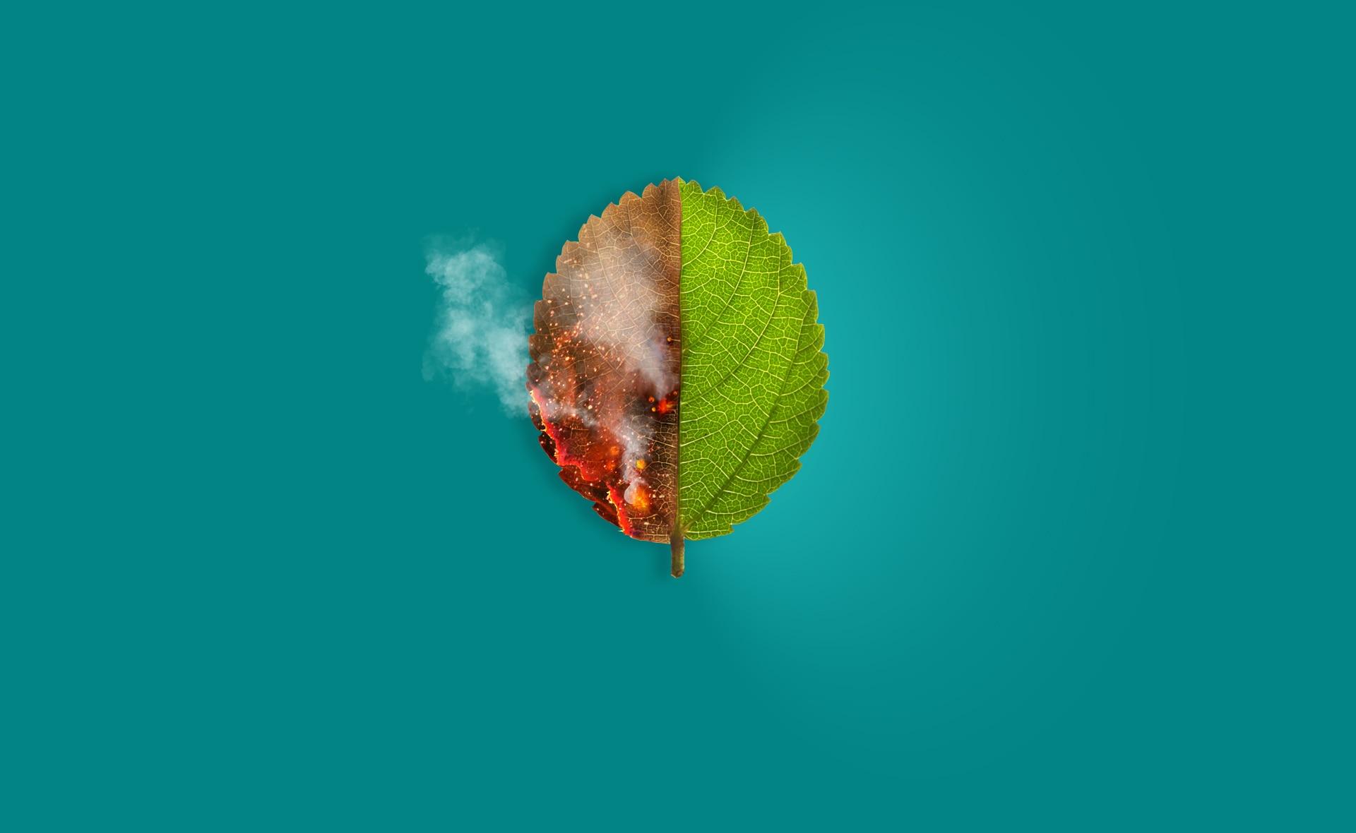 BBVA-cambio-climatico-apertura-peligro-bosques-medioambiente-planeta-incendios-efecto-invernadero