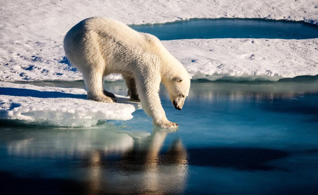 BBVA-efecto-invernadero-apertura-sostenibilidad-oso-cambio-climático-animales-hielo-glaciar-naturaliza-cuidado-planeta