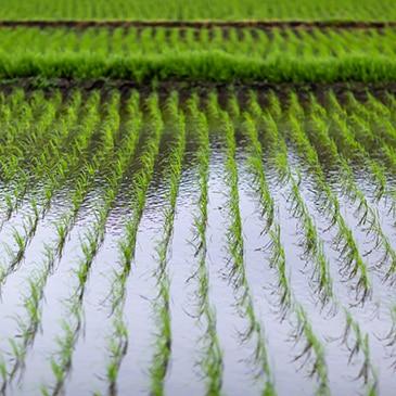 BBVA-escasez-agua-naturaleza-sostenibilidad-plantas-