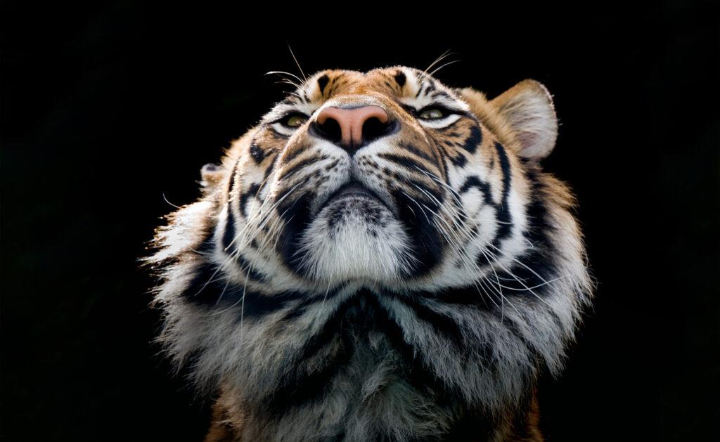 animales-peligro-extincion-sostenibilidad-bbva