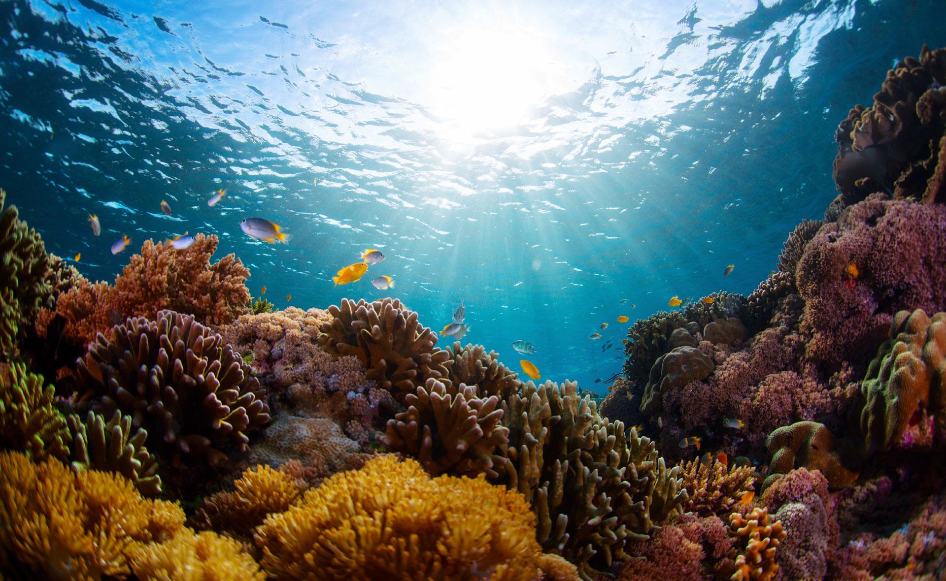 biodiversidad_apertura-mar-peces-especie-marinas-oceano