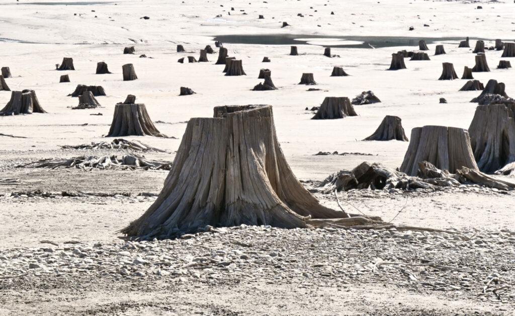 biodiversidad_deforestación-medioambiente-cuidado-planeta
