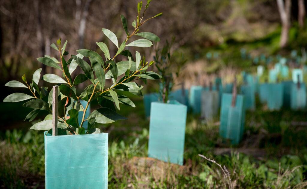 biodiversidad_plantas-plantación-vegetación-vida-tierra-sostenibilidad-campos-naturaleza