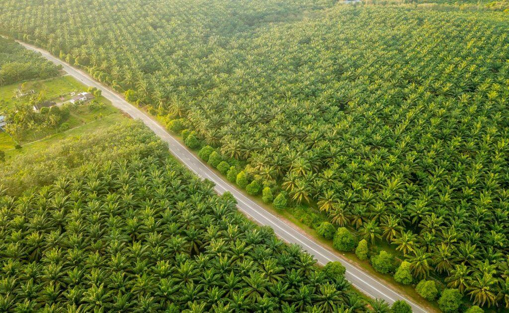 biodiversidad_sobrexplotacion-campos-palmeras-cultivos