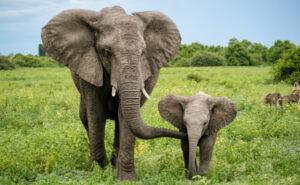 elefante-nieves-sostenibilidad-peligro-extincion-bbva-biodiversidad