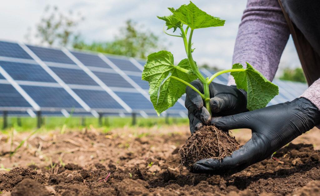 huerto-solar-creación-sostenibilidad-plantas-energia-sol-plantación-bbva