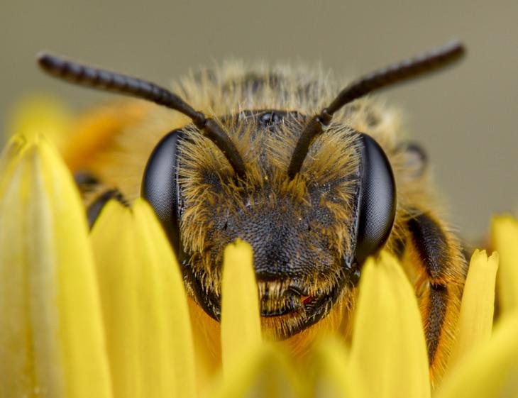 BBVA-abejas-microplasticos-animales-medioambiente-cuidado-planeta-naturaleza-