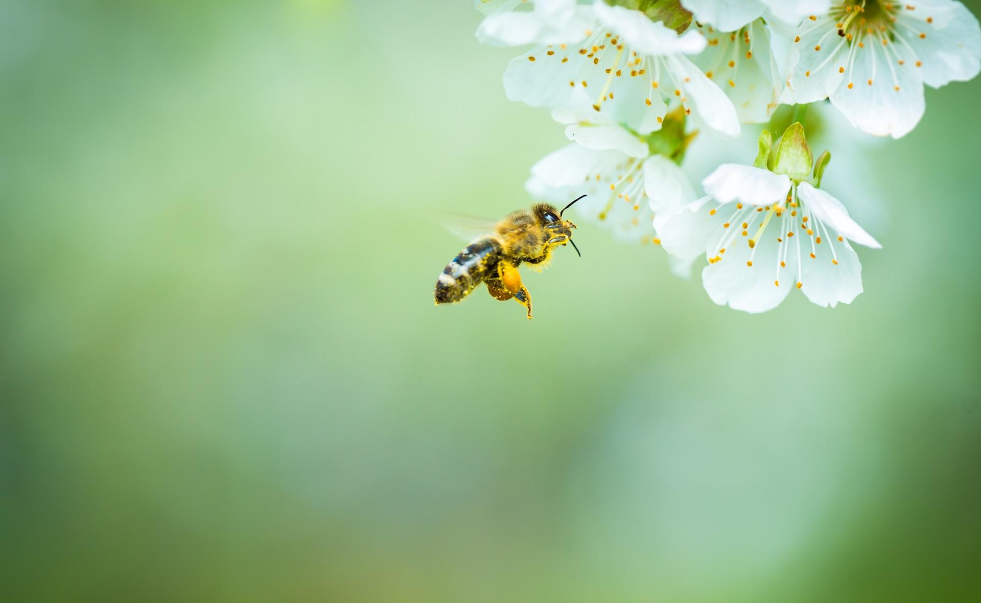BBVA-abejas-microplasticos-animales-sostenibilidad-contaminacion-vegetacion-floracion-alimento