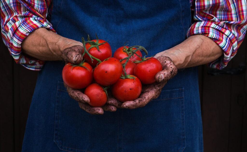 BBVA-agricultura-ecologica-apertura-tomates-alimento-sostenible
