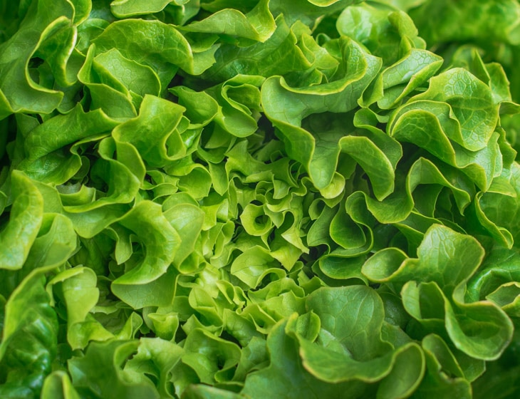 BBVA-agricultura-ecologica-int-2-lechuga-alimento-sostenibilidad-