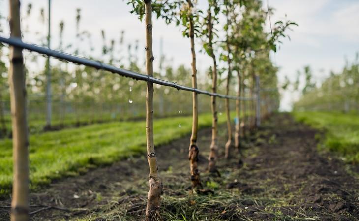 BBVA-naturaleza-arboles-agricultura-sostenible-campo-tierra-sector-agrario-medidas
