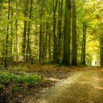 que_es_sostenibilidad-educacion-concepto-cuidado-proteccion-planeta-bosque