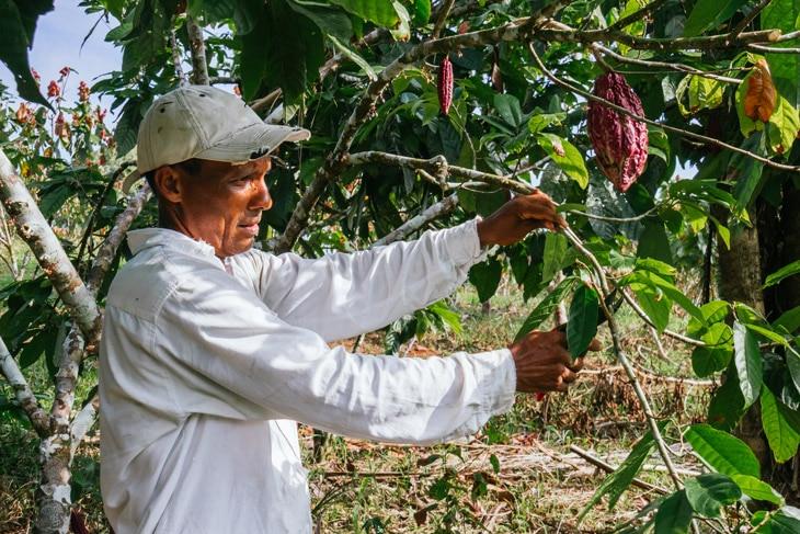 BBVA-pobreza-desigualdad-America-latina-alimentacion-mundial-cultivo-campo