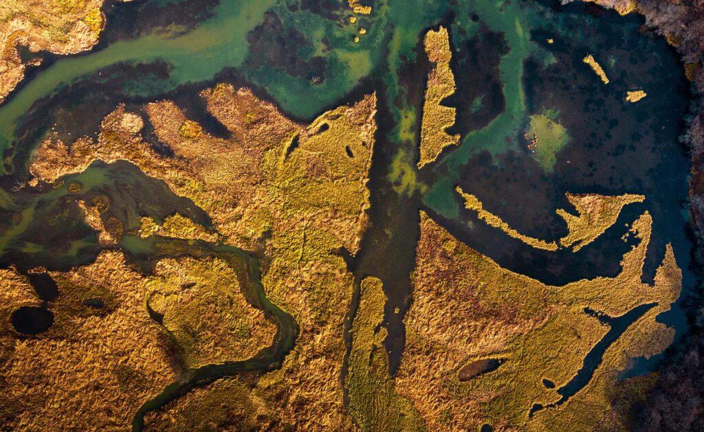 BBVA-ecologia-sostenibilidad-ciencia-planeta
