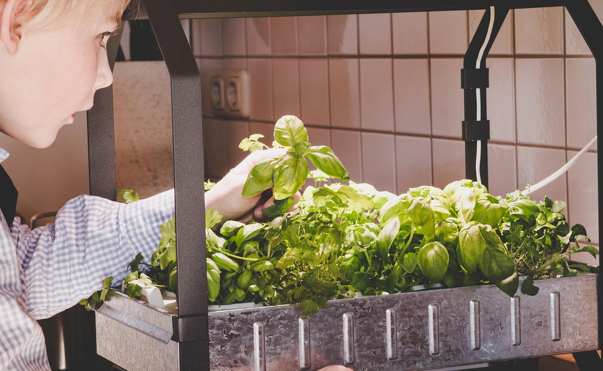 BBVA-hidroponia-apertura-cultivo-huerto-ecologico-sostenibilidad-plantacion-verduras-renovable-alimentos-sanos