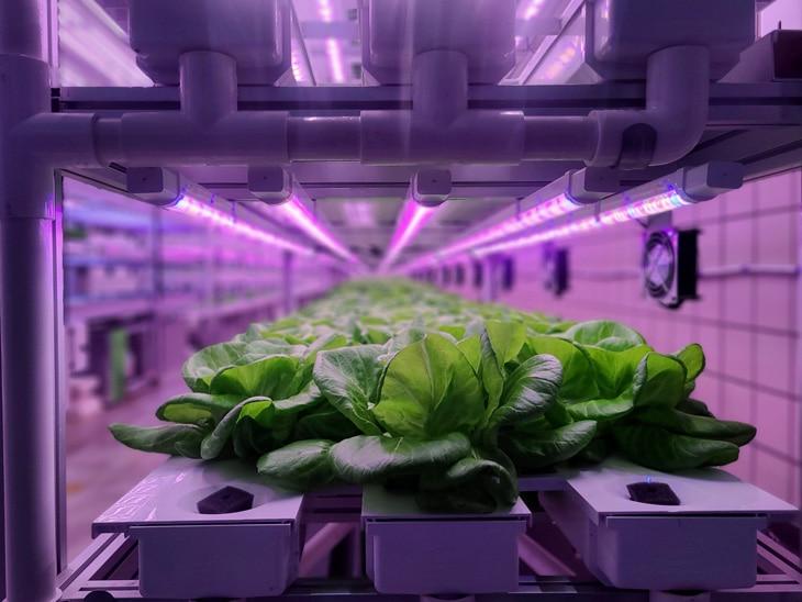 BBVA-huertos-hidropónicos-alimentos-renovable-campo-sostenibilidad-hortalizas-gastronomia