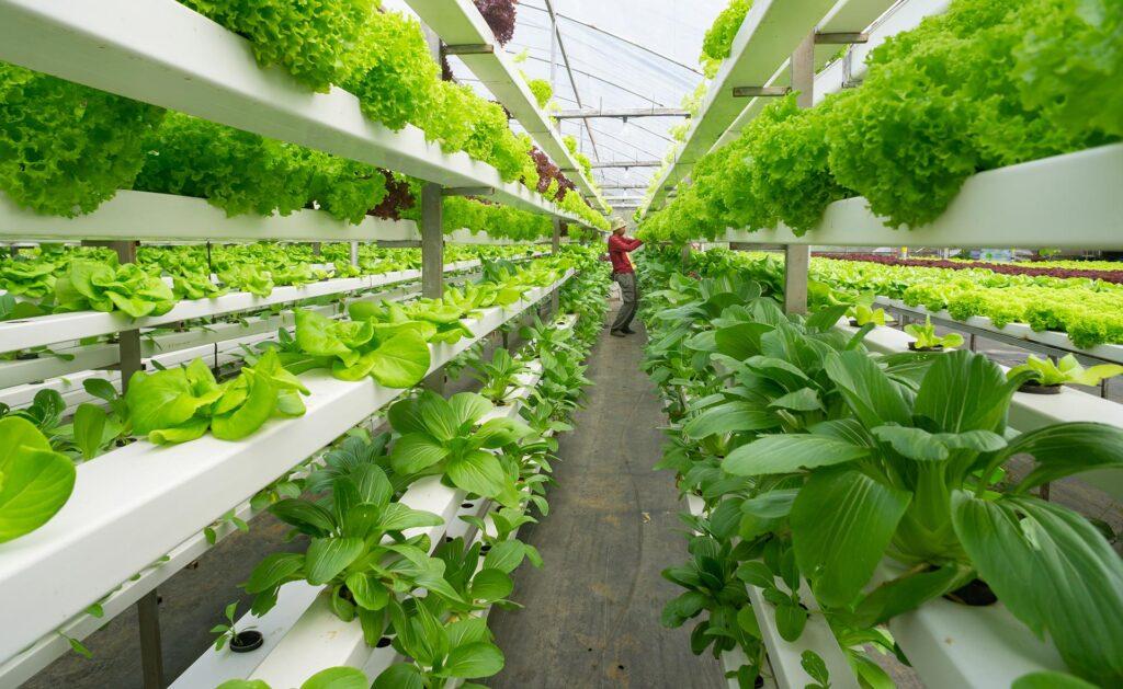 BBVA-huertos-hidropónicos-sostenibilidad-campo-renovable
