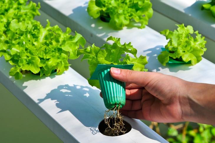 BBVA-huertos-hidropónicos-sostenibilidad-creacion-alimentos-propios-campo-