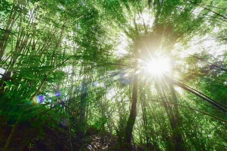 BBVA-pacto-verde-europa-leyes-sostenibilidad-progreso-cuidado-planeta-renovable-proteccion-campo