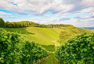 Francia-naturaleza-campo-vegetacion-medioambiente-pais-energia-limpia-verde-sostenible