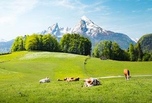 Suiza-animales-agricultura-ganaderia-sostenibilidad-montañas-paisaje-renovable