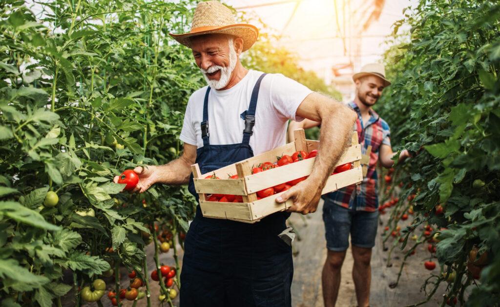 agricultores-familiares-alimentos-sostenibilidad-pequeñas-empresas-cuidado-agricultura-verduras-
