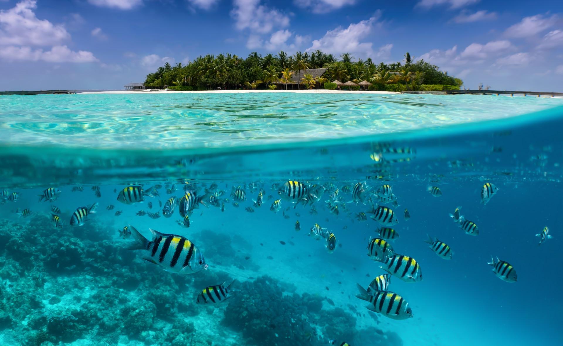 biodiversidad-podcast-conservacion-proteccion-medioambiente-planeta-cuidado-mar-peces-oceano-playa-turismo-viaje-