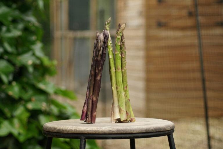 esparragos-gastronomia-sostenible-celler-bbva-producto-mes-sostenibilidad