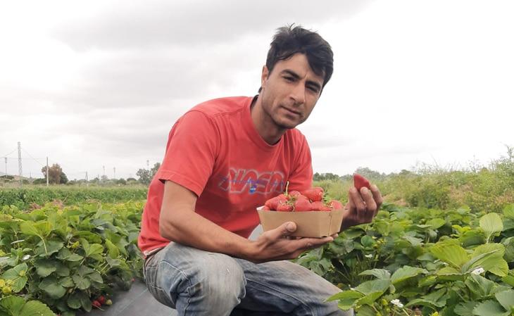 fresas-pau-santamaria-bbva-celler-can-roca-productores