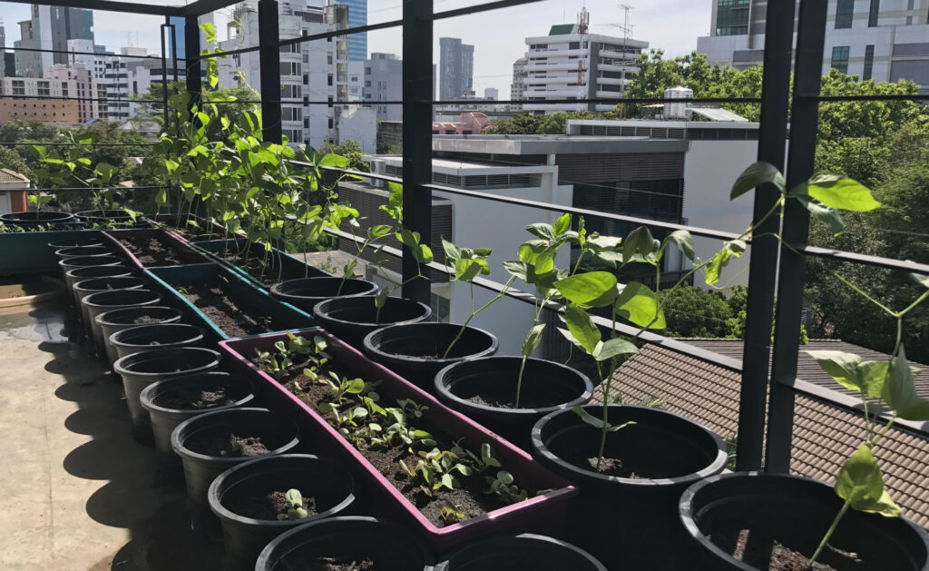 tejados_sostenibles_interior-vida-sostenible-casas-azoteas-alturas-pisos