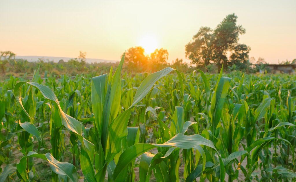 BBVA-naturaleza-campo-biocombustibles-repostar-energia-sostenible