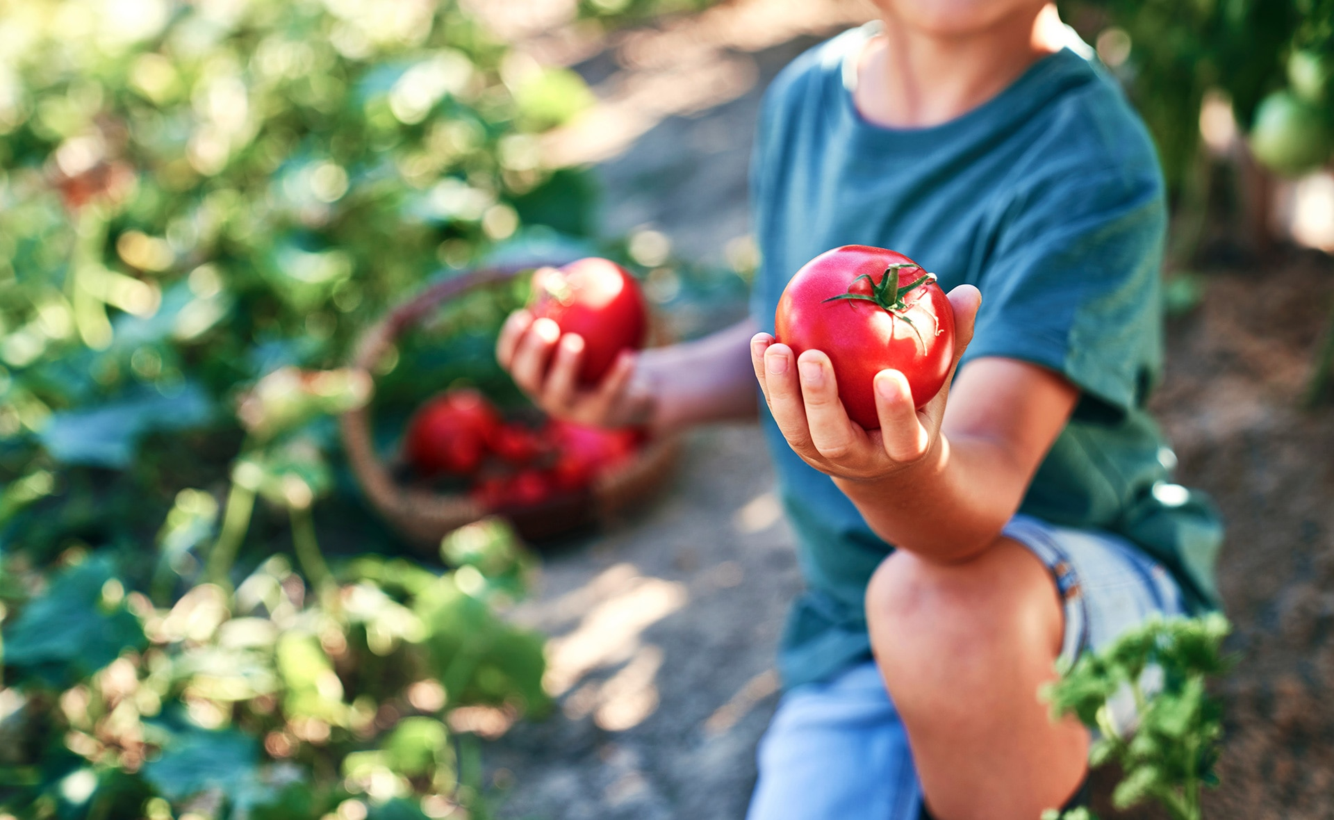 BBVA-cultivo-tomates-gastronomia-sostenibilidad-huerto