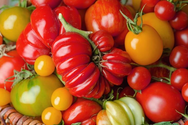 BBVA-cultivo-tomates-huerto-gastronomia-alimentos-sostenibilidad-cuidado-