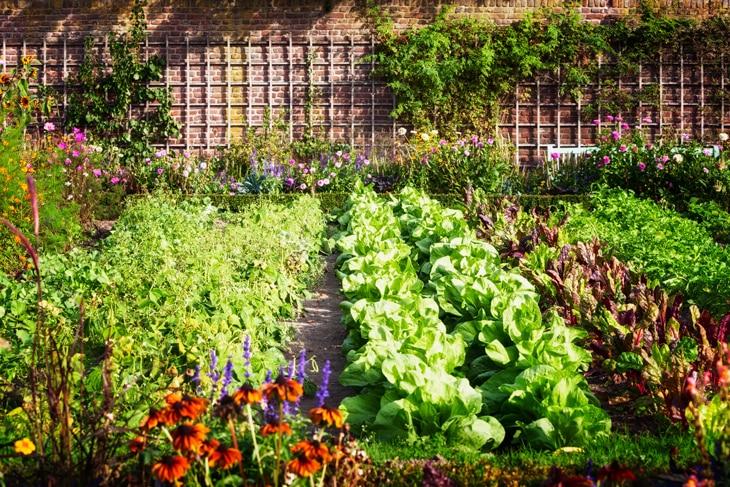 BBVA-cultivo-tomates-huerto-sostenible-gastronomia-renovable-alimentos-ricos-