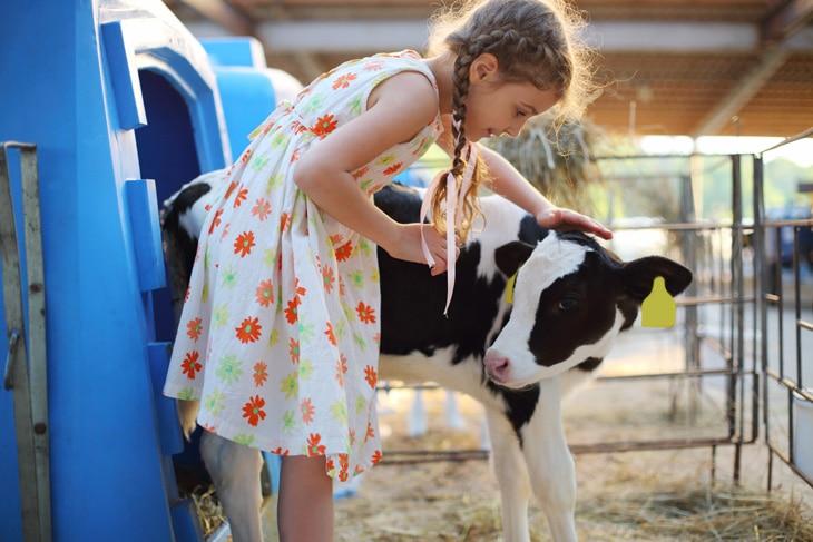 BBVA-ordeño-robotizado-vaca-alimentacion-sostenible-metodologia-renovable-cuidado-proteccion-animales
