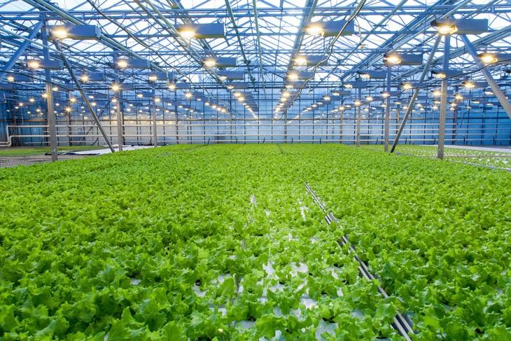 BBVA-sostenibilidad-horticultura-agricultura-alimentacion