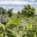 Geudis Tejeda, agricultor Rep Dominicana FMBBVA
