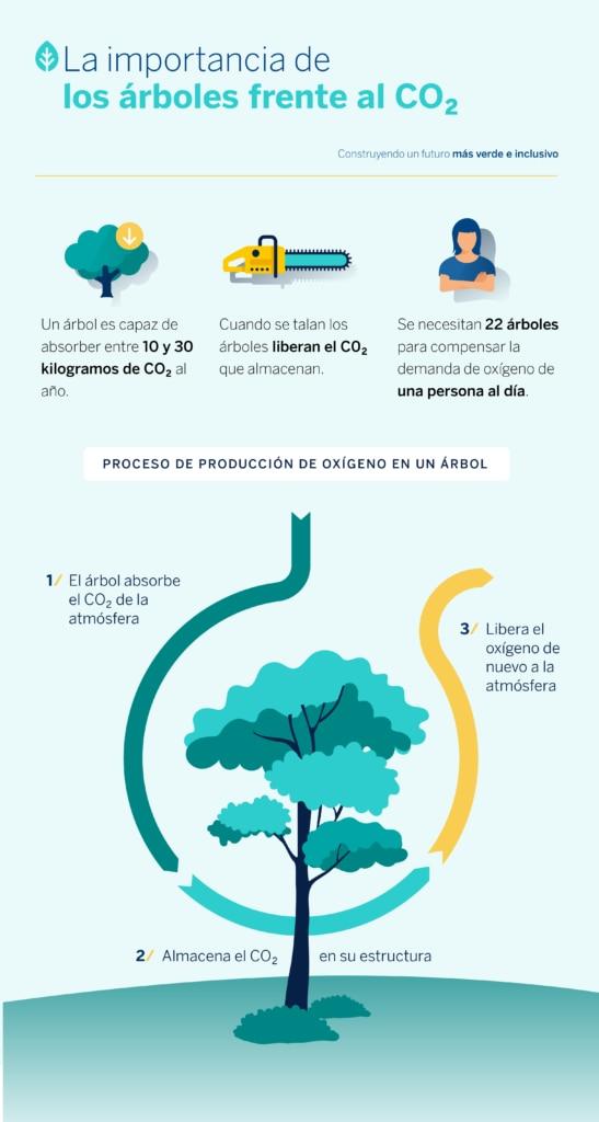 Importancia-arboles-co2-bbva-sostenibilidad