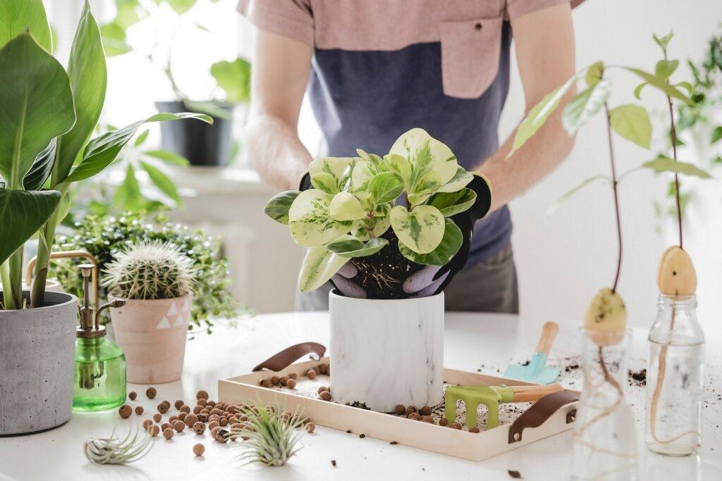 planta interior cultivo