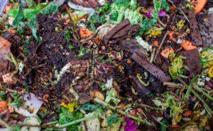 BBVA-compost-suelo_vivo-Fase_termofila