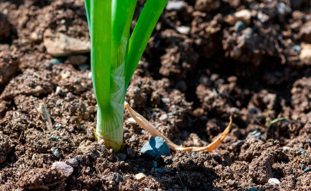 BBVA-sostenible_compost_fases-suelo_vivo-planta