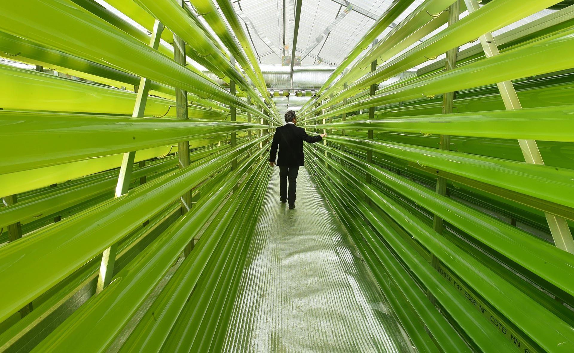 BBVA-procesos-alimentos-sostenibilidad-futuro-microalgas-comida-carne-gastronomia