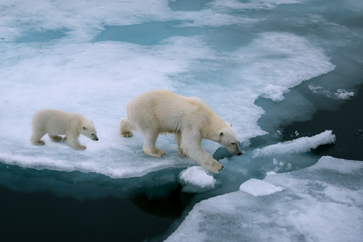 BBVA-cambio-climatico-artico-oso-polar-sostenibilidad-planeta-cuidado-artico