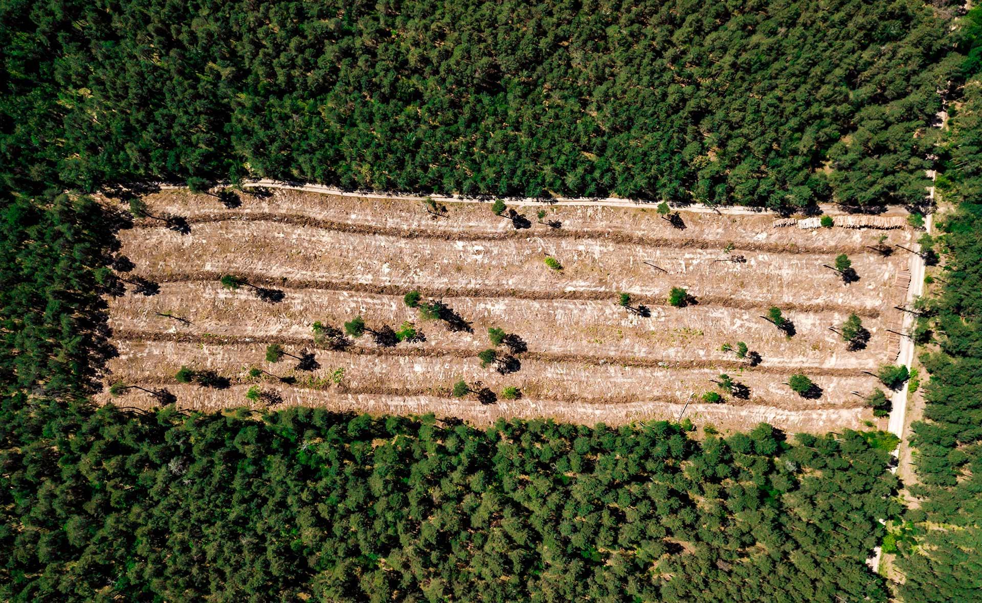 BBVA-deforestacion-sostenibilidad-actividad-humana-campo-naturaleza-destruccion-tierra